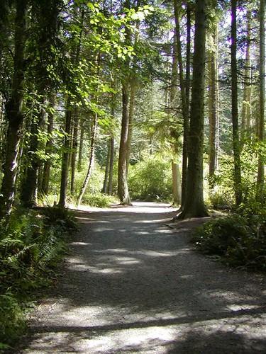 Sequim Forest