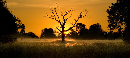 uk england panorama orange tree topf25 topv2222 sunrise landscape dead gold dawn interestingness topf50 topv555 topv333 topf75 raw branch glow been1of100 deadtree mostinteresting slough berkshire kevday topf100 langley langleypark loveaffair sppccandid chtk