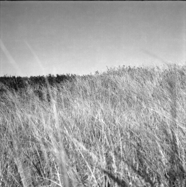 fluffy dune