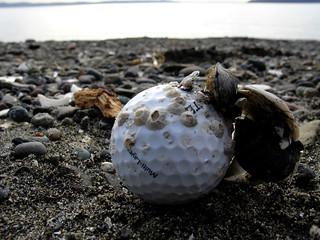 Golfball Growth