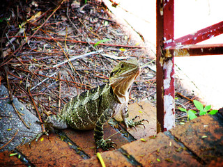 lizard on the stairs, arty style | by Nick Caldwell