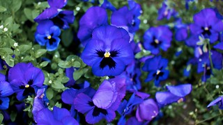 so blue | by jmtosses