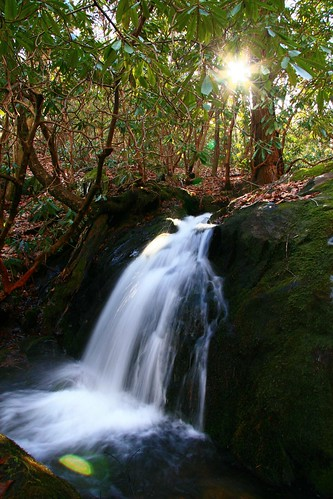 longexposure light plants sun sunlight mountain inspiration mountains nature wet water rural georgia wonder geotagged real us waterfall leaf moss woods walk surreal explore trail waterfalls rhododendron evergreens gps wilderness campground 2008 incredible rohdodendron specnature gisteq