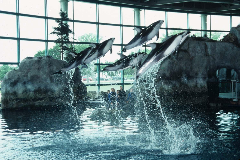 Shedd Aquarium - Dolphin Show - Chicago, IL