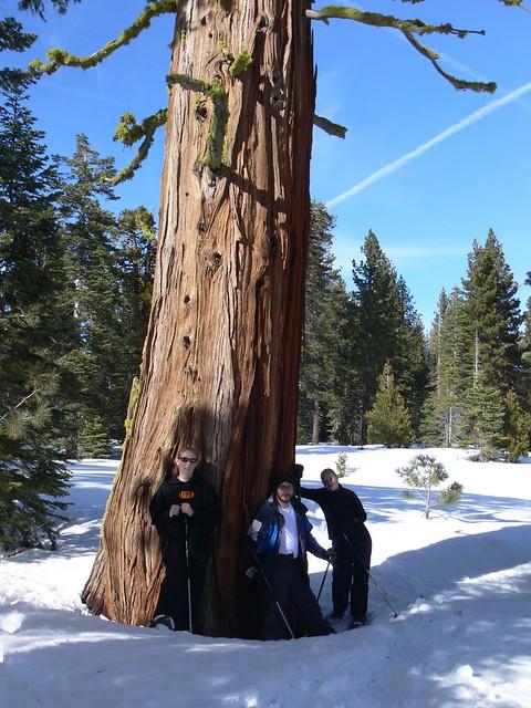 big tree to hug