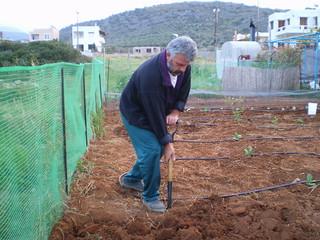 Organic garden beginnings, Crete, Greece.  Photo by Nikki Rose