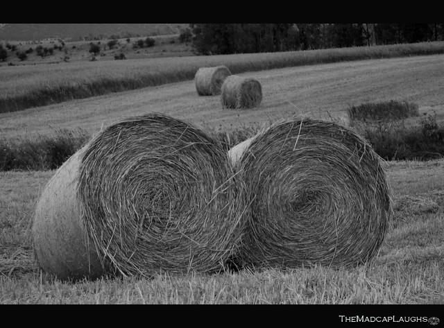 __Harvest__