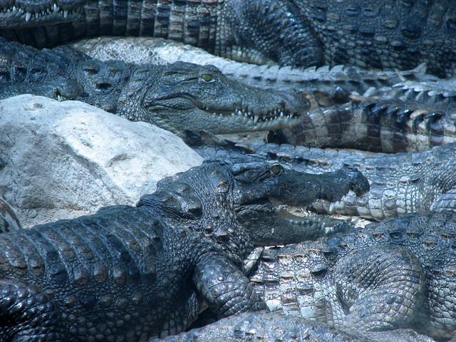 fresh from a bath... @ Crocodile Bank, Chennai