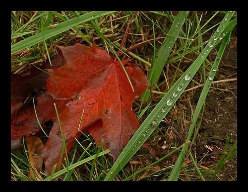 End of October | by greentzatziki