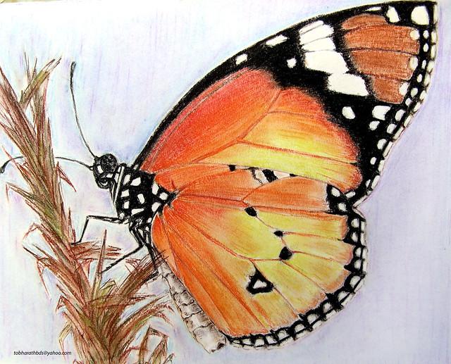 butterfly--soft pastel
