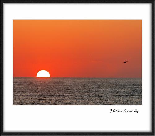 morning red sun bird beach sunrise duck northcarolina frame outerbanks