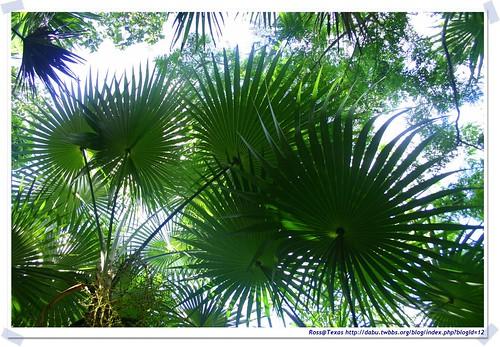 20041020_Guana@BVI_Palm Ghut_003_A | by rosstsai