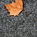 Image: Lonely Leaf on the Pavement