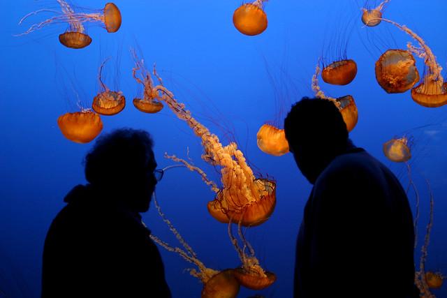 Monterey Bay Aquarium 06
