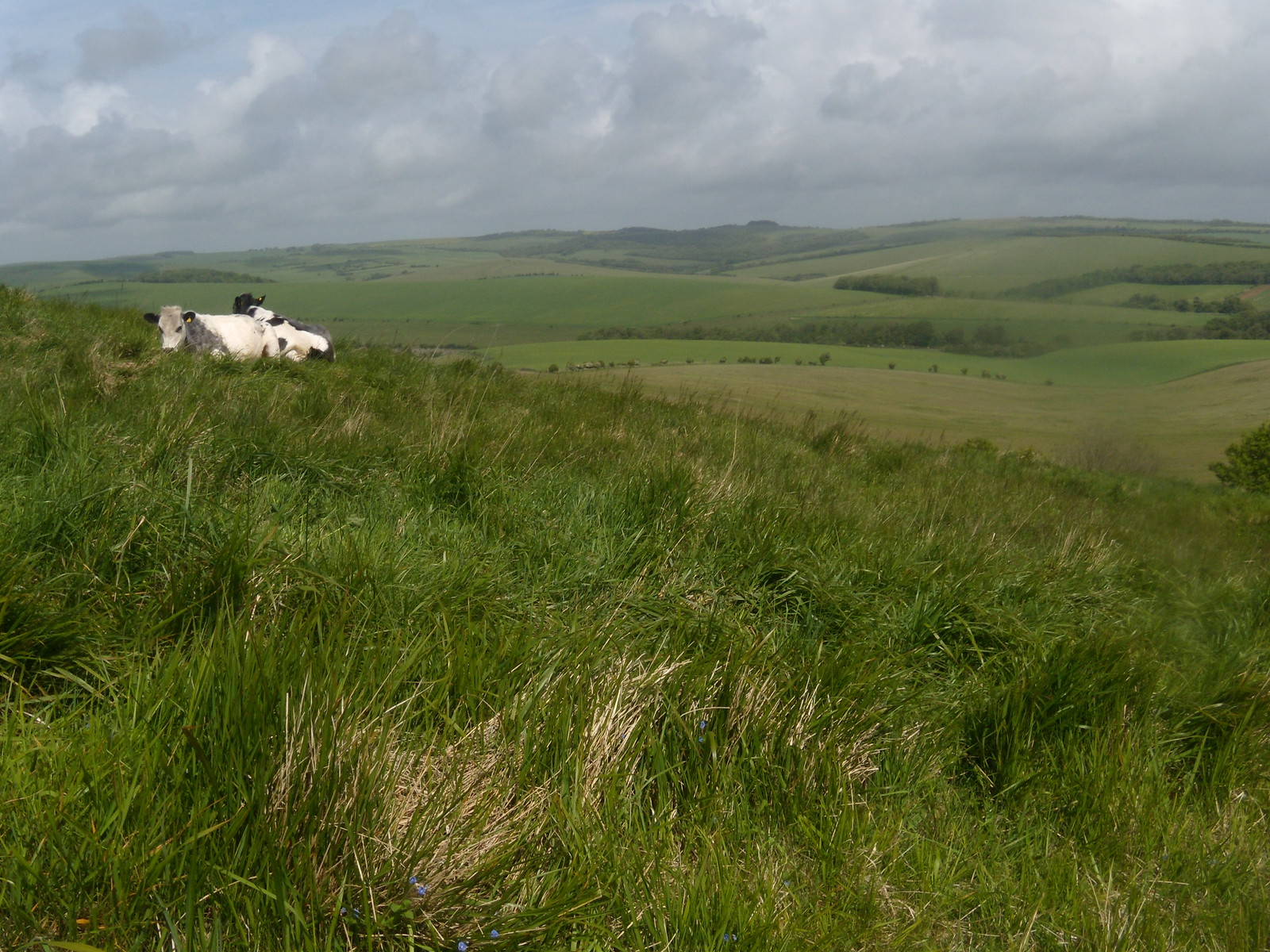 Cows'n'scenery Lewes circular via Rodmell