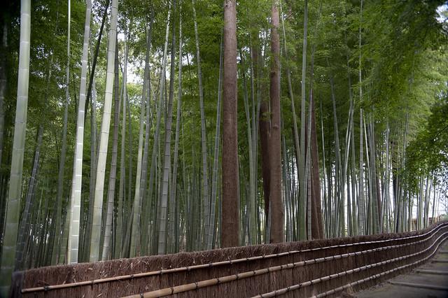 Kairakuen 10 水戸偕楽園 Bamboo Lane