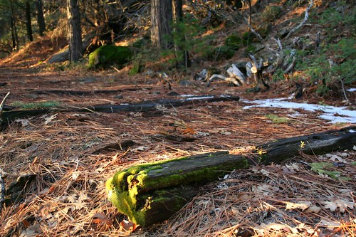 railroad ties sierranevada narrowgauge eldoradocounty railroadties eldoradonationalforest