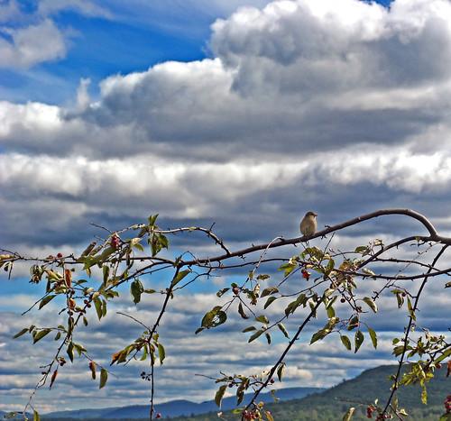bird nature clouds branch massachusetts sparrow berkshires lenox bostonist westernmass kripalu universalhub kripalucenterforyogaandhealth