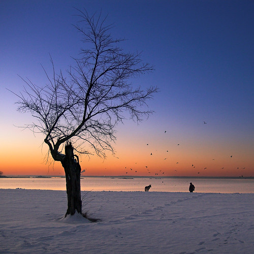 winter dog seagulls snow man landscape dawn connecticut ct squareformat stamford coveislandpark
