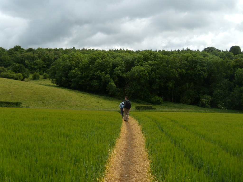 Path through crops Rowlands Castle Circular