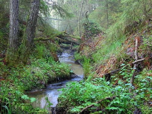 nature creek forest finland geotagged brook trickle korpilahti