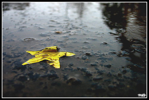 star in the rain | by transp