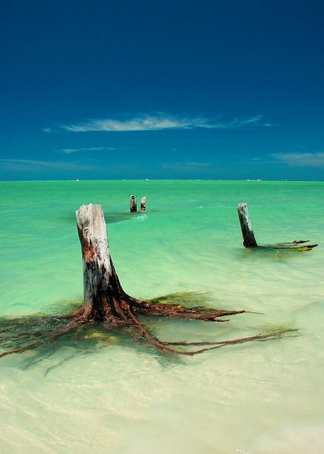 Tropical Stumps