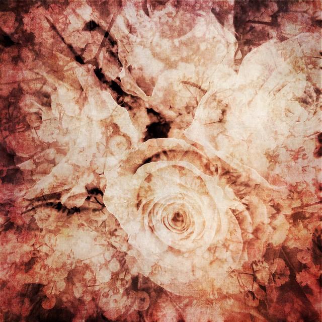 Roses and gypsophila II