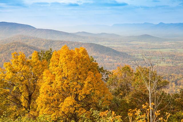 Golden - Shenandoah National Park