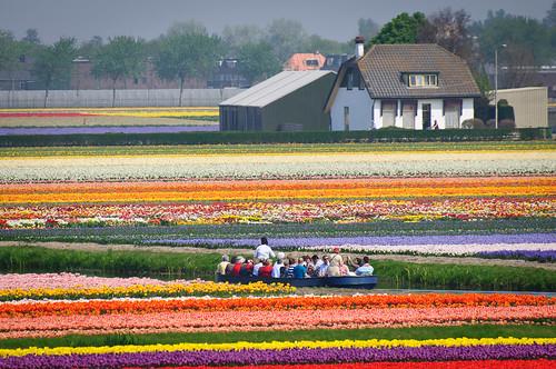 Cruising through the Tulips   by MissTessmacher