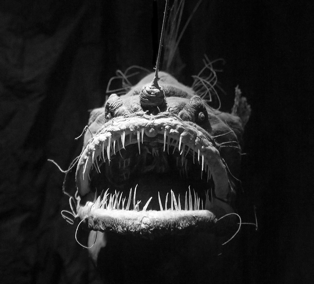 Angler Fish B&W | I recently went back to the Tynemouth ...