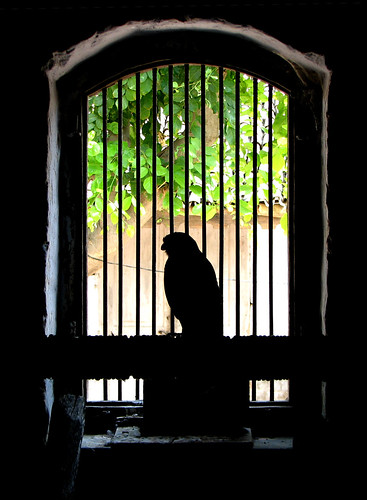 Trapped | by Malay Maniar