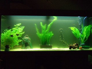 Fish tank   by nand_