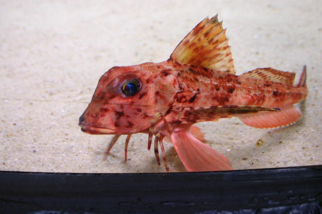 Crazy Kew Fish