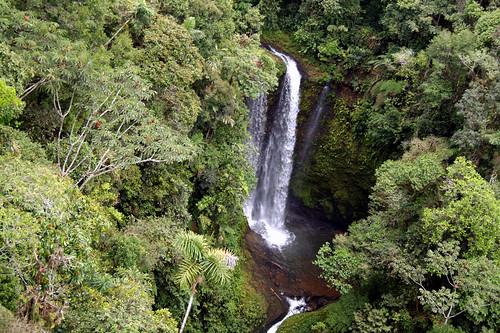 Amazonian forest   by skifatenum