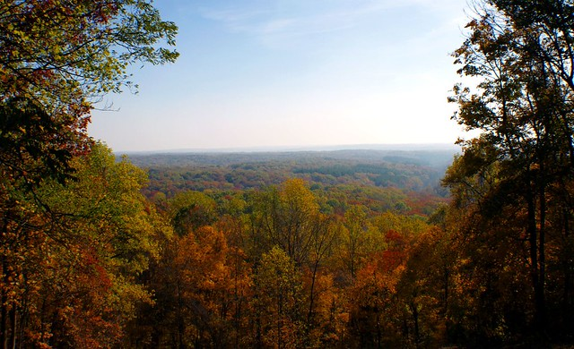 indiana state forest | Paul J Everett | Flickr