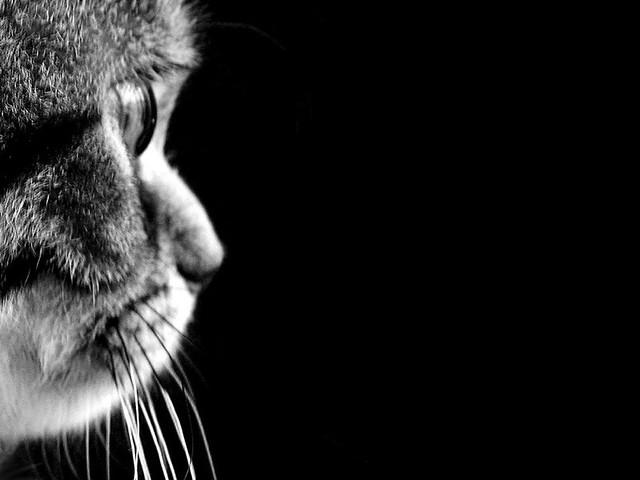 Black & Meow