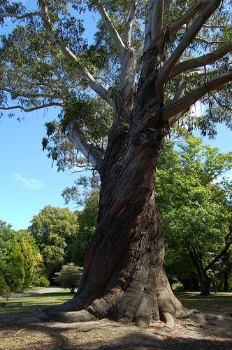 Obr strom