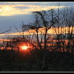 Peach Tree Sunset