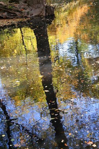 autumn fall nature leaves canon colours foliage canonrebelxt rockcreekpark platinumphoto