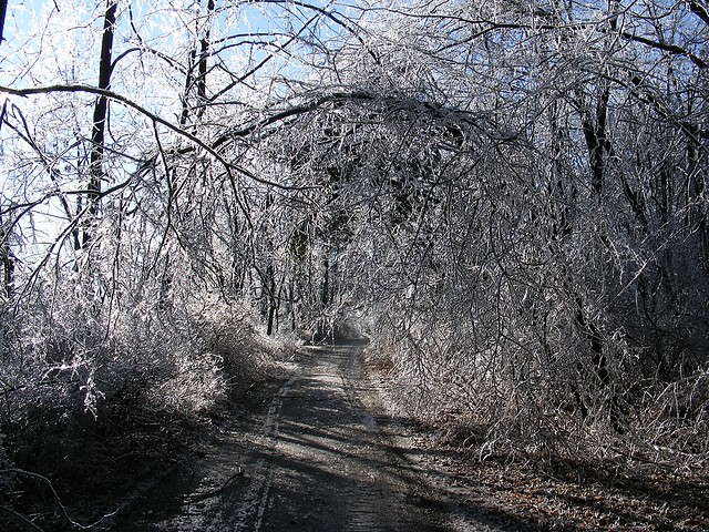 Ice Tree Tunnel