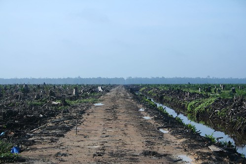 Oil Palm Concession | by H Dragon
