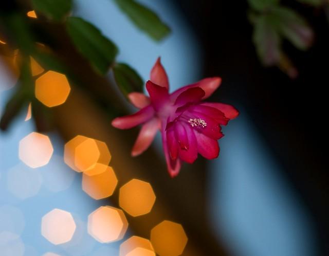 50mm Lobby Bloom