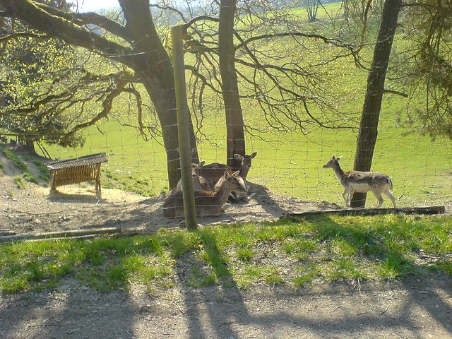 Rotwildgatter bei Oberorke