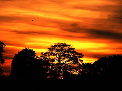 trees sunset red sun black birds silhouette yellow dark landscape horizon flight atmosphere late colourful