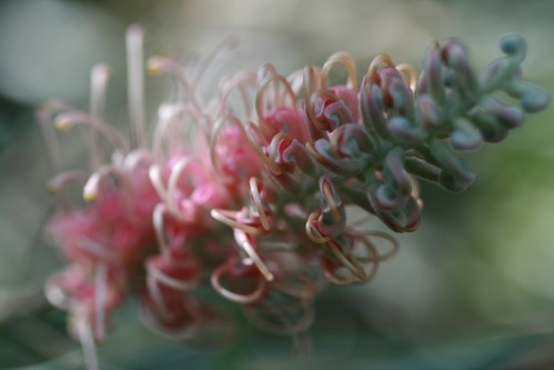Flower | by puzzlement