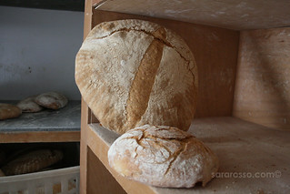 The Pugliese loaf dwarfing a regular size loaf | by MsAdventuresinItaly