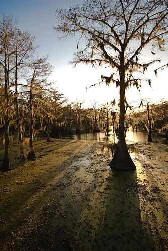 trees sunset water geotagged texas unitedstates bayou swamp cypress jefferson uncertain geo:lat=3275759600 geo:lon=9414730500