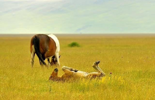 Italy, Dreamin' foal