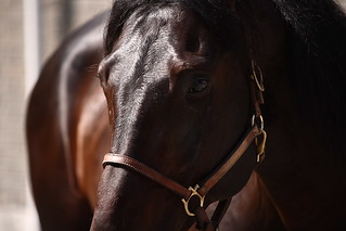 Close up of a 4 year old stallion | by nevvi